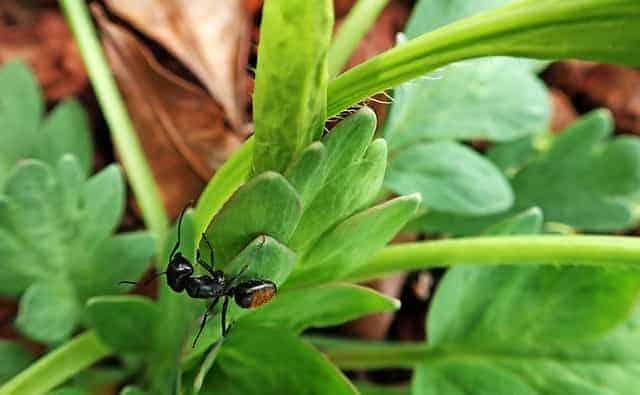plants ants dont like