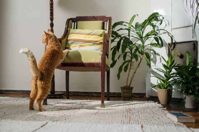 keep cats away from indoor plants