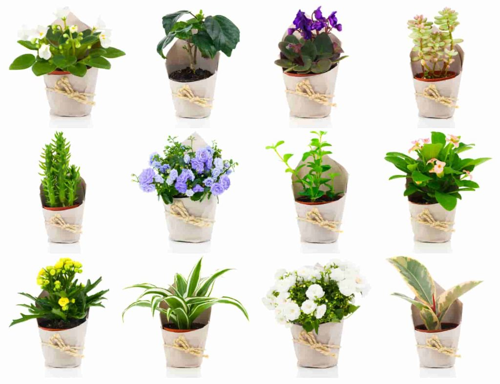 house plants that repel spiders