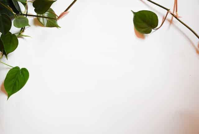 plants similar to pothos