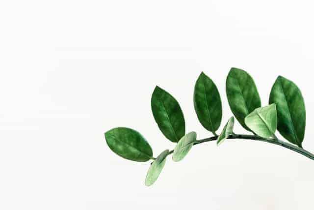 plants similar to zz plant