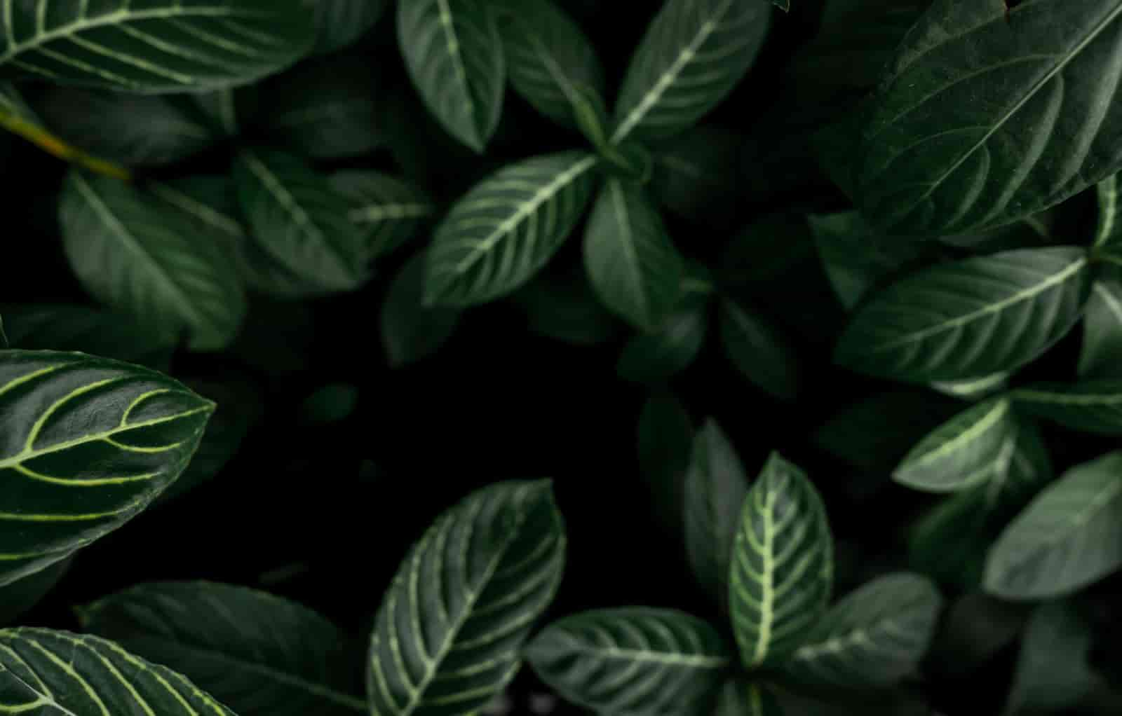 Plants That Grow In Complete Darkness