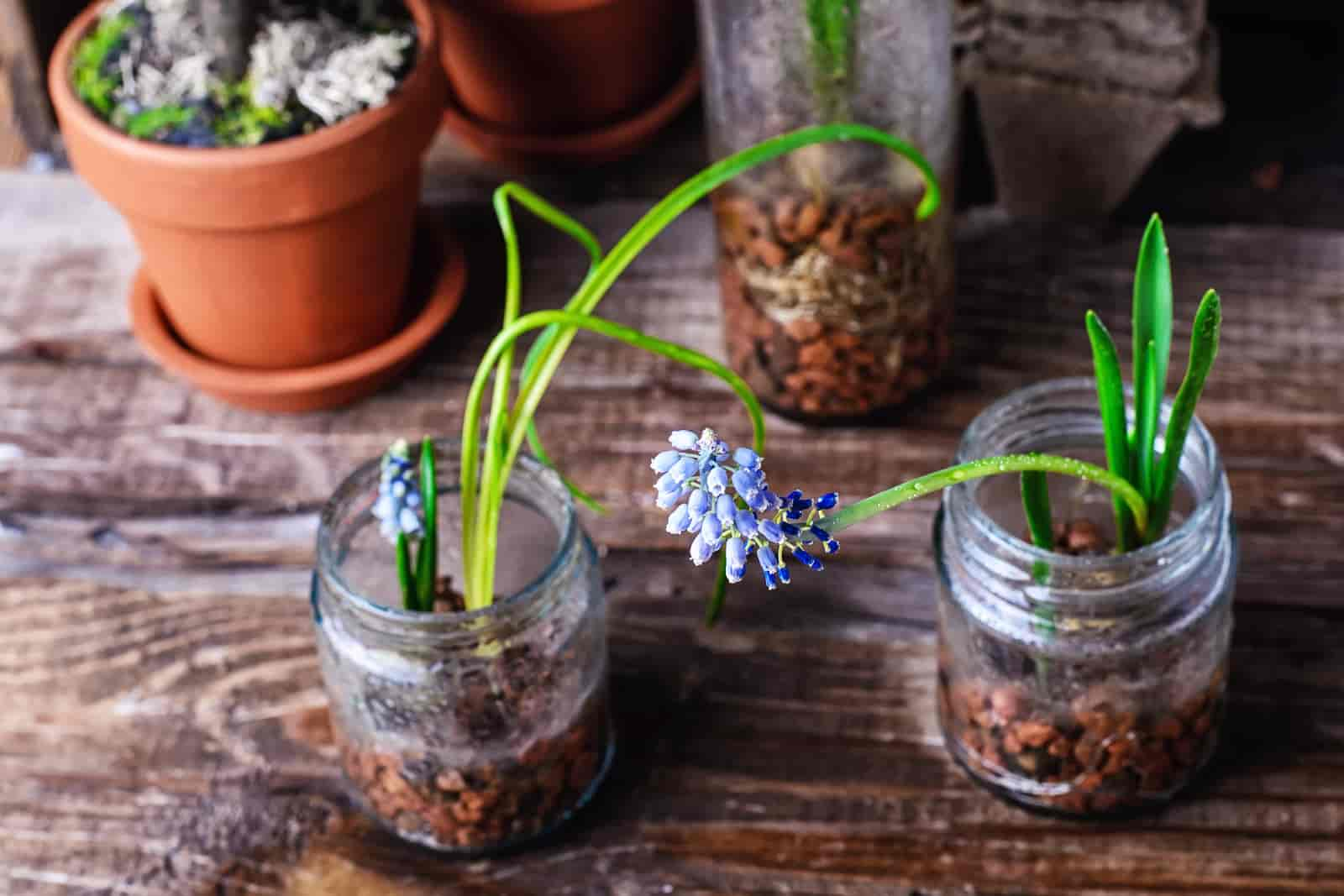 Plants That Don't Need Drainage Holes