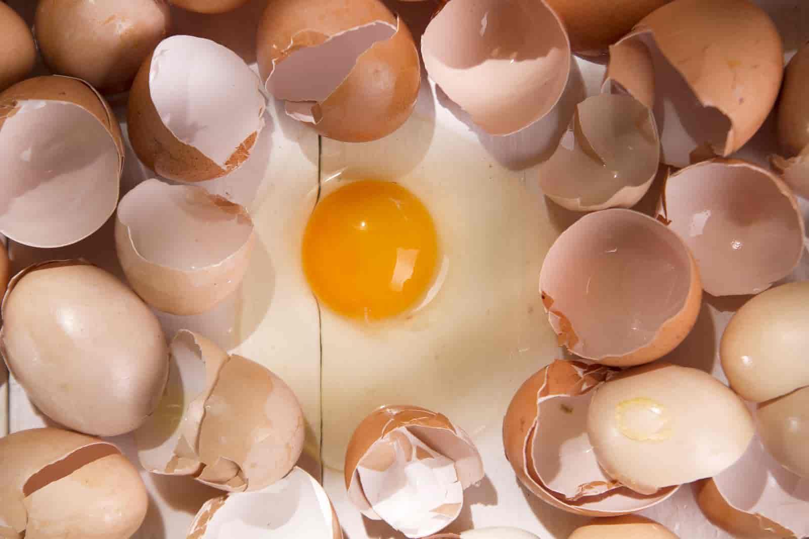do pothos like eggshells