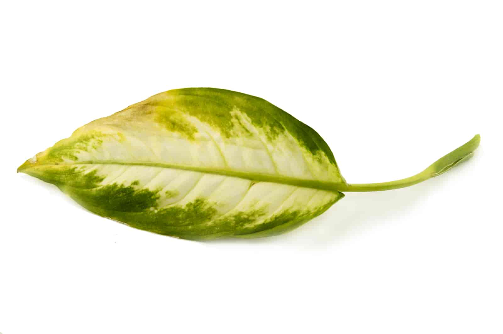 Green Plant With Yellow Spots