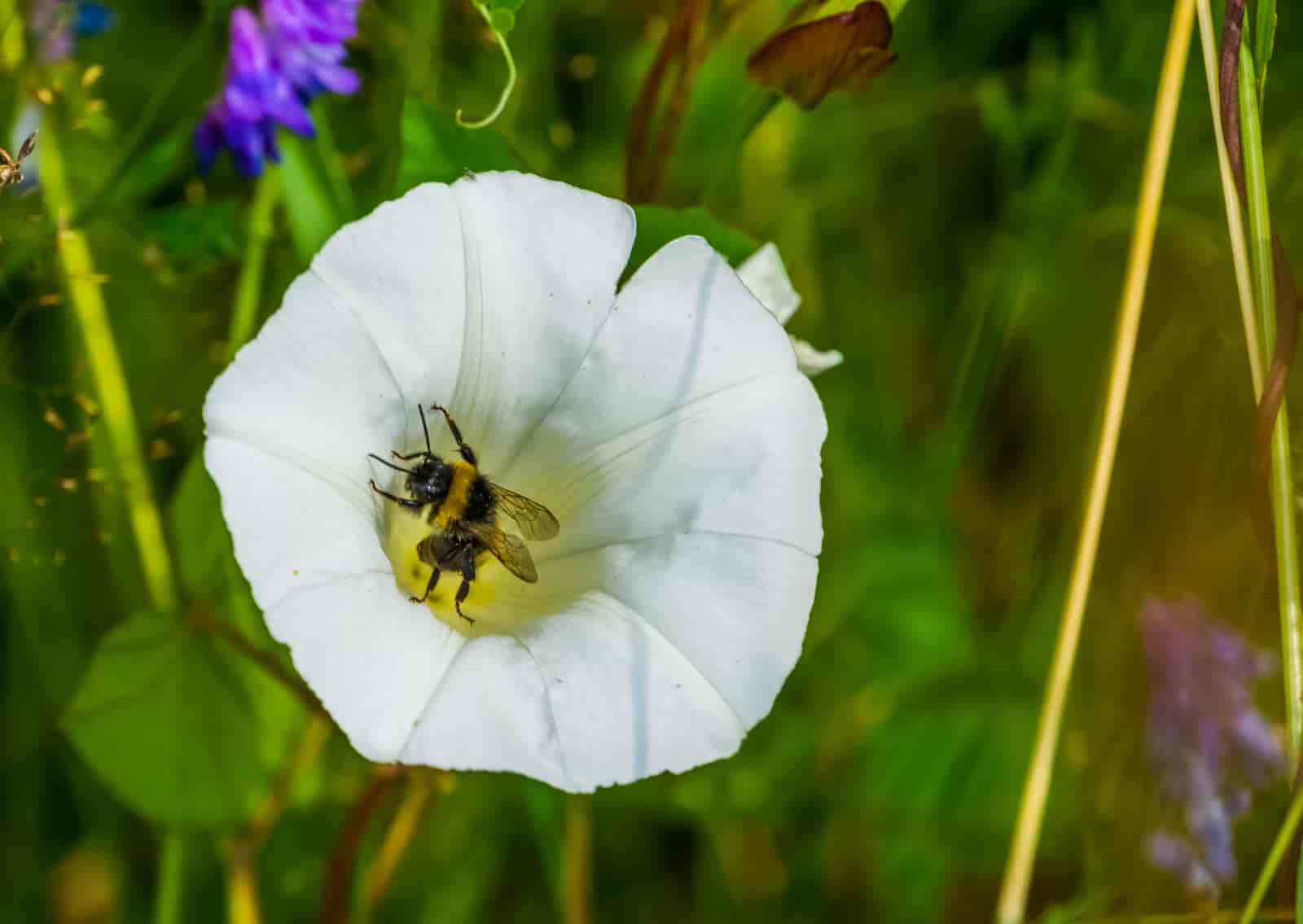 list of plants that attract bees