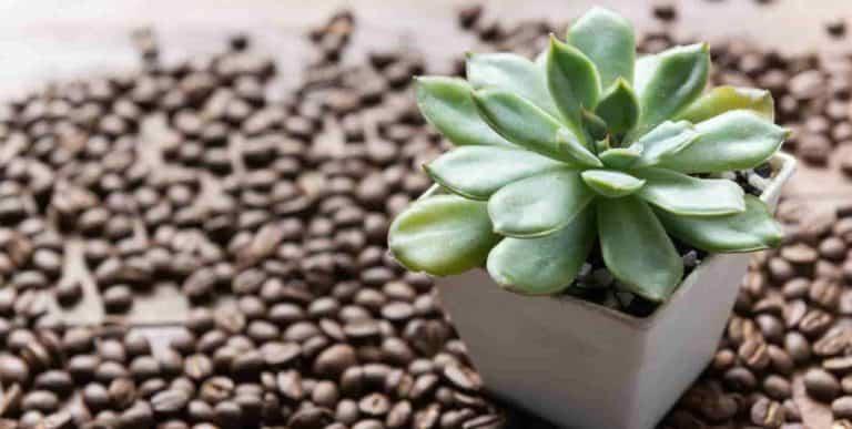 house plants that like coffee grounds