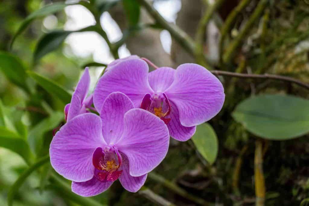 low light flowering house plants