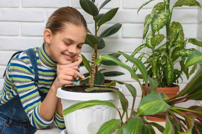 Types of houseplants