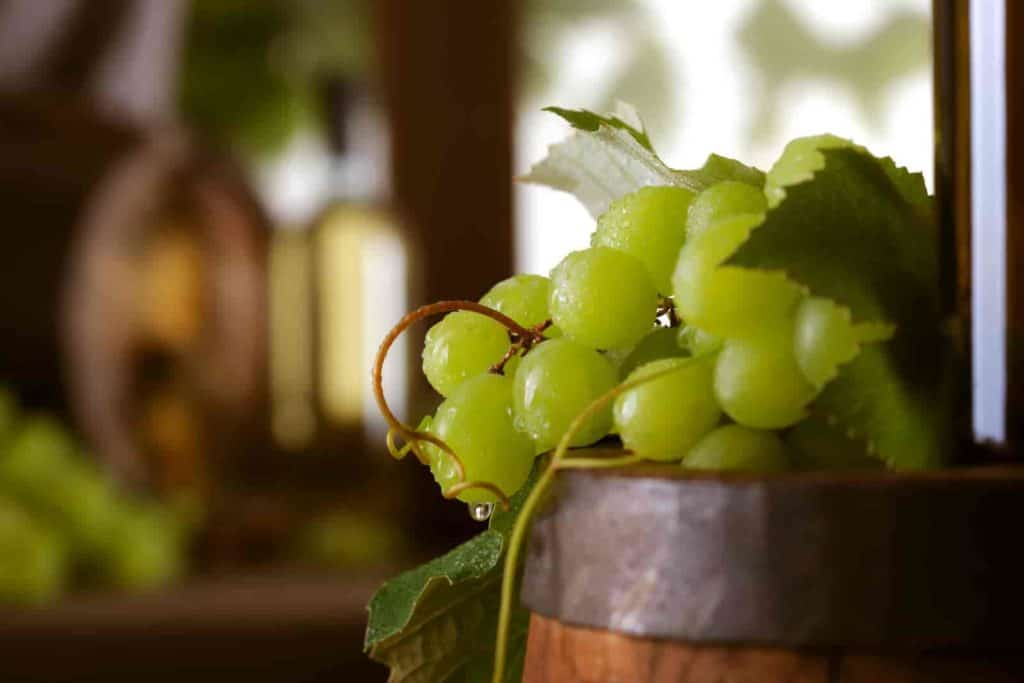 can you grow grapes in a pot
