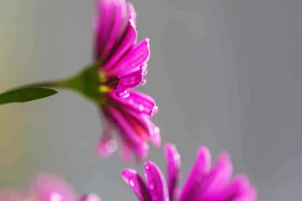 list of rare flower names