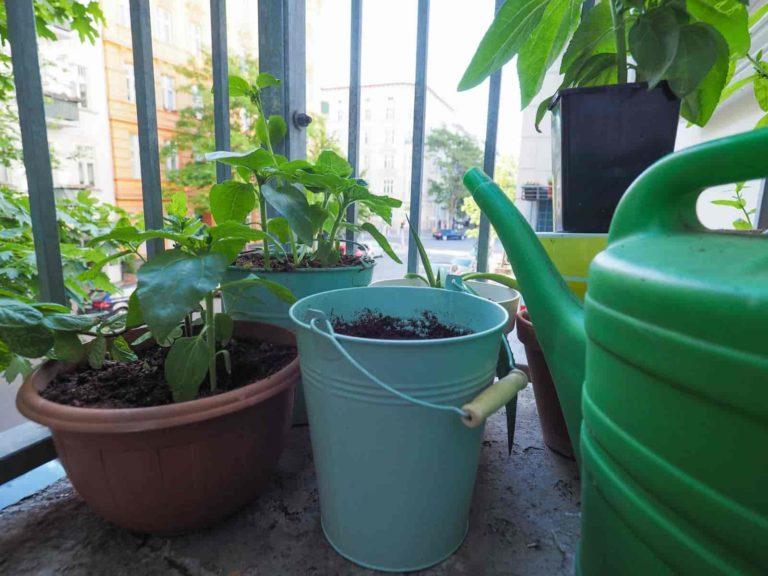 how long do houseplants live