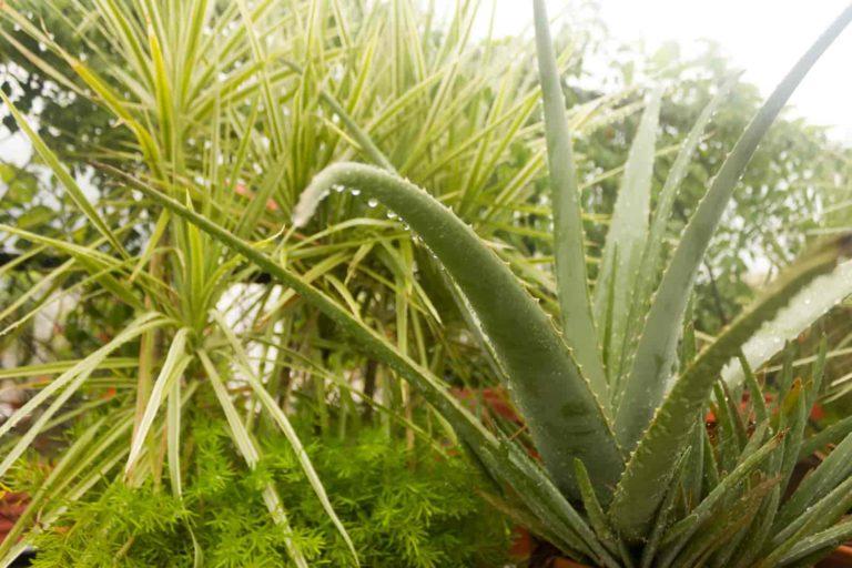 should i mist my plants