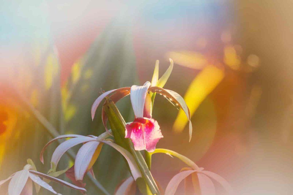 best flowers to grow hydroponically