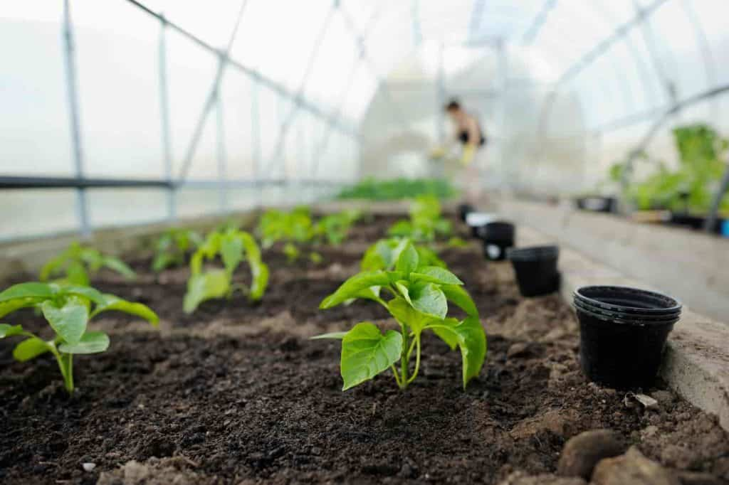 plants that grow in shallow soil
