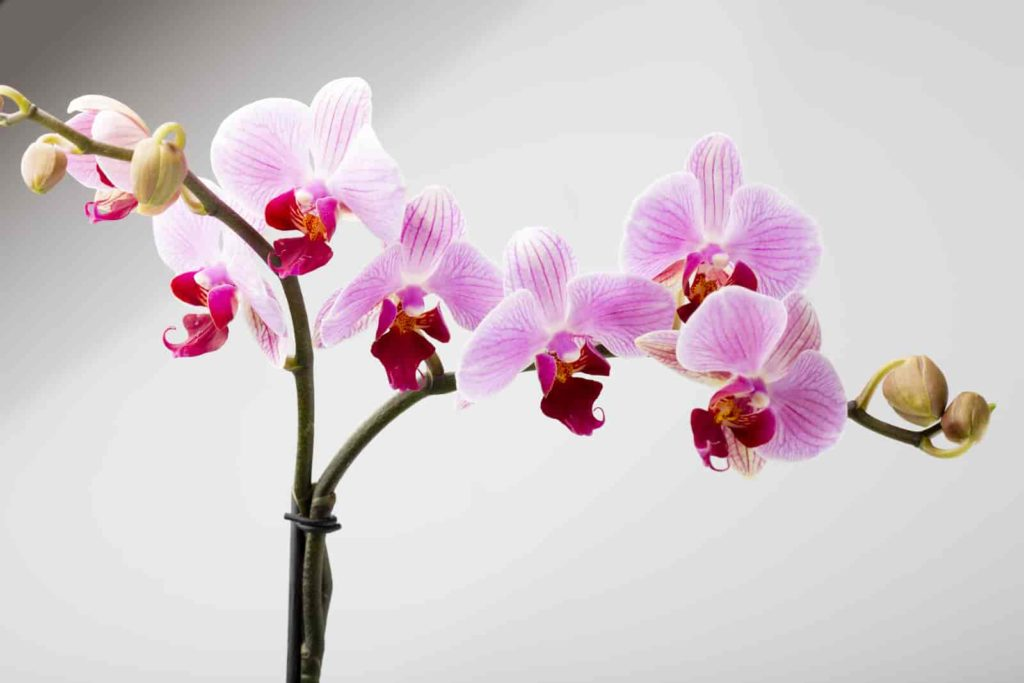 how to repot an orchid with air roots