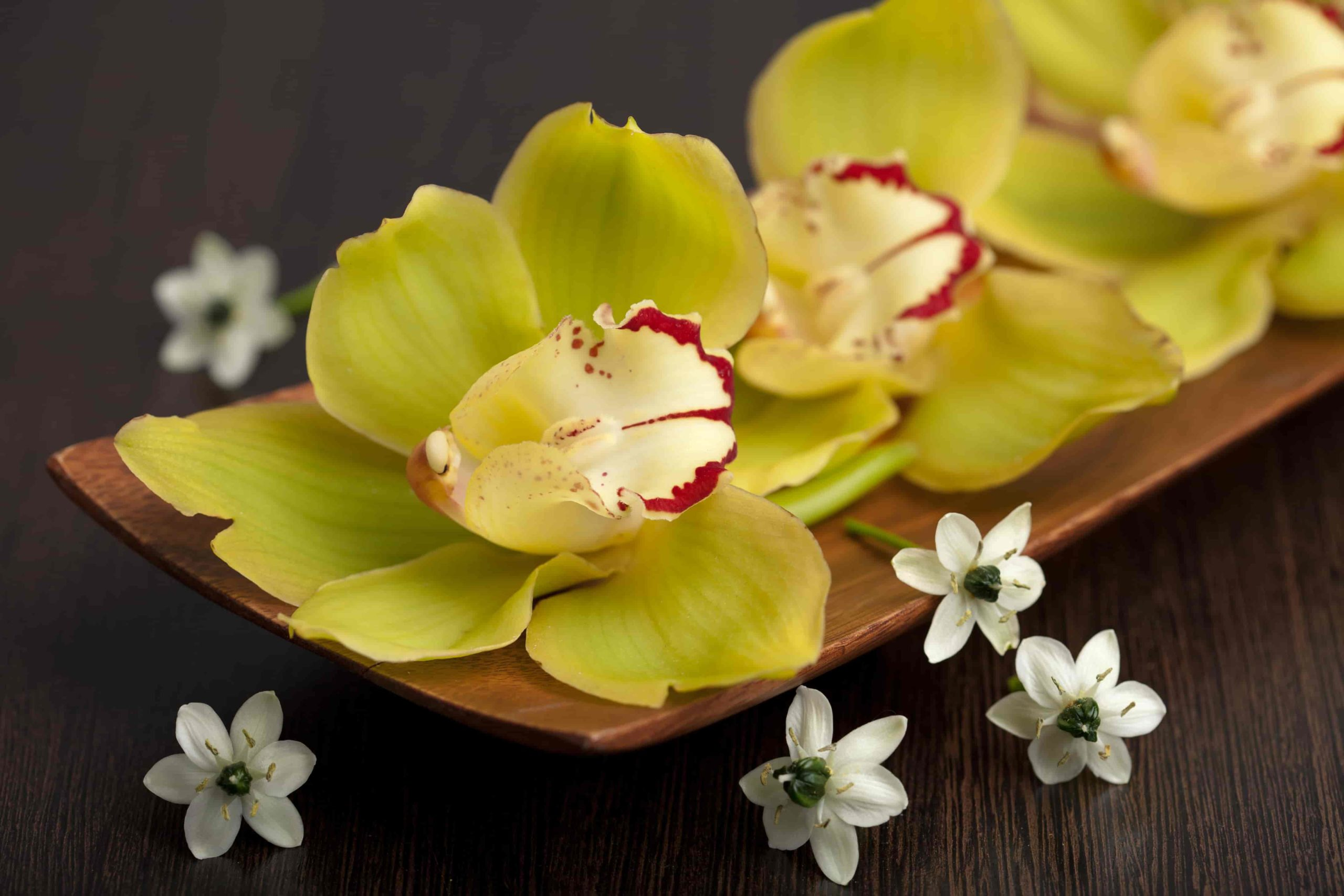 gifts for orchid lovers