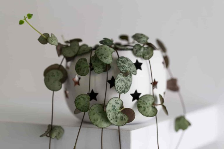 how to propagate string of hearts