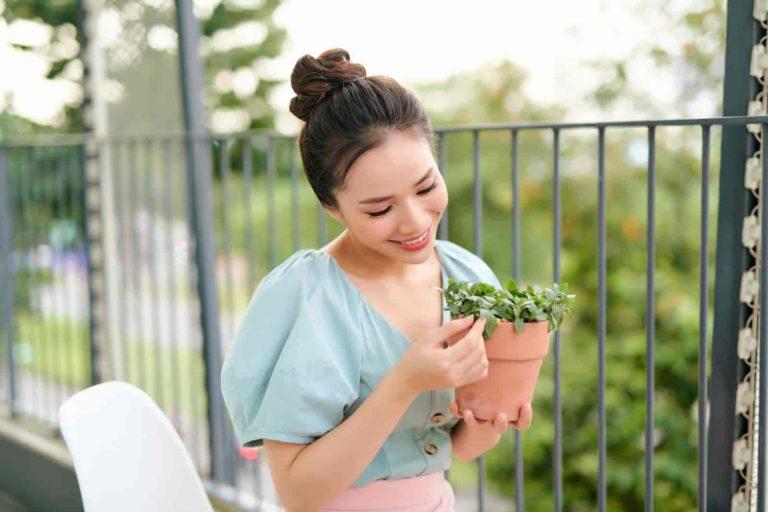 plants for apartment balcony