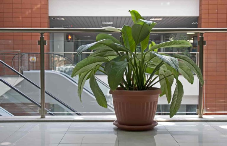 plants for office with no windows