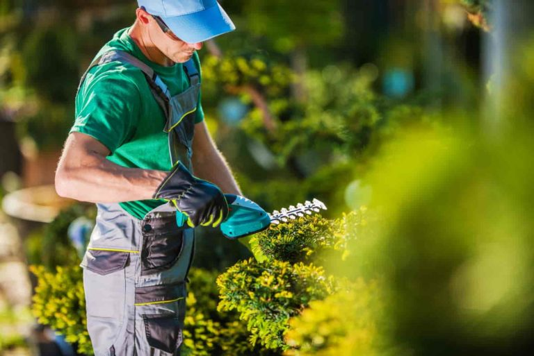 when to put plants outside in spring